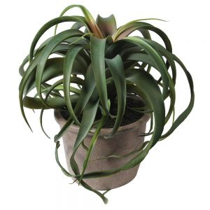 faux cactus Tillandsia succulent plant pot