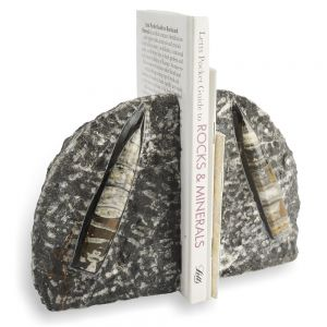 fossil-orthoceras-bookend-pair-black-stone